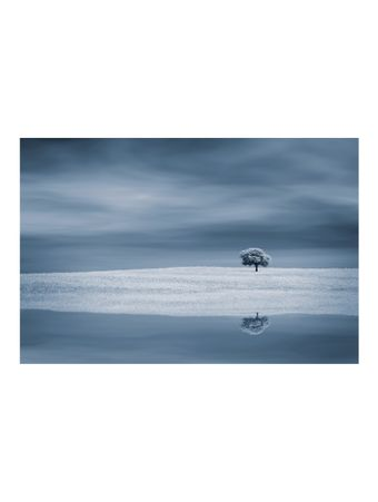 TREE-NEAR-WATER-FOTOGRAFIA