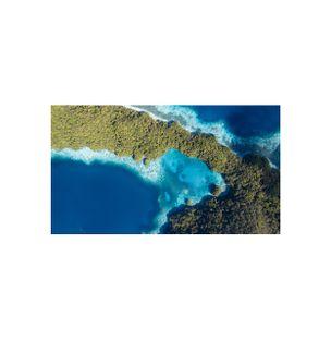 Jellyfish-Lake-Palau-Fotografia
