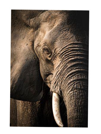 Gentle-Giant-Fotografia