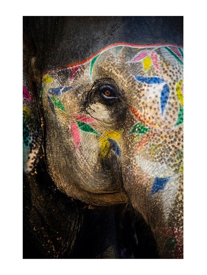 Painted-Elephant-II-Papel-Algodao