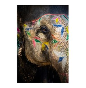 Painted-Elephant-II-Fotografia