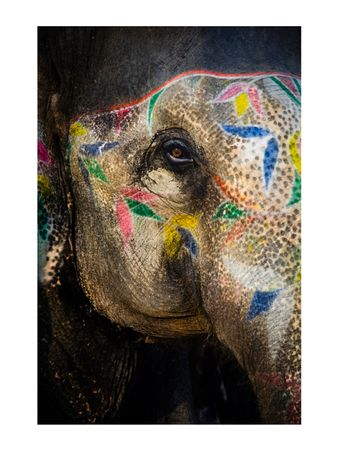 Painted-Elephant-II-Fotografia
