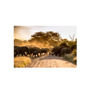 Elephant-Crossing-Fotografia
