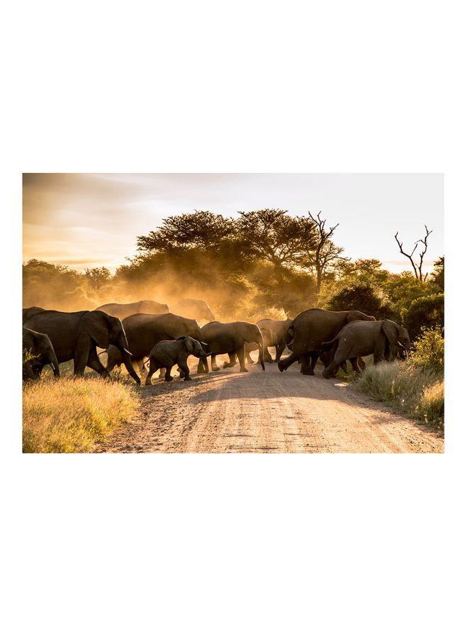 Elephant-Crossing-Fotografia