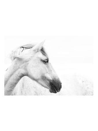 Portrait-of-a-Horse-I-Fotografia