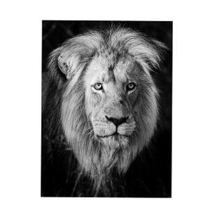 Lion-King-Papel-Algodao