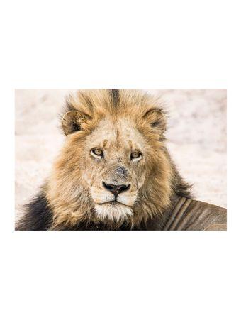 Handsome-King-Papel-Algodao