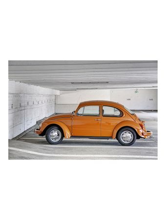 Beetle-Fotografia