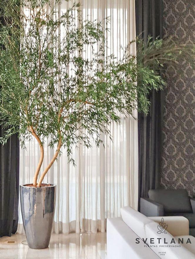 Bambu-mosso-duplo-preservado-250-Bambu-mosso-duplo-preservado-250