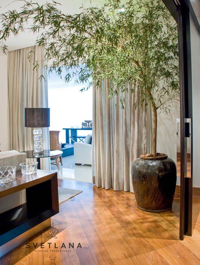 Bambu-mosso-preservado-250-Bambu-mosso-preservado-250